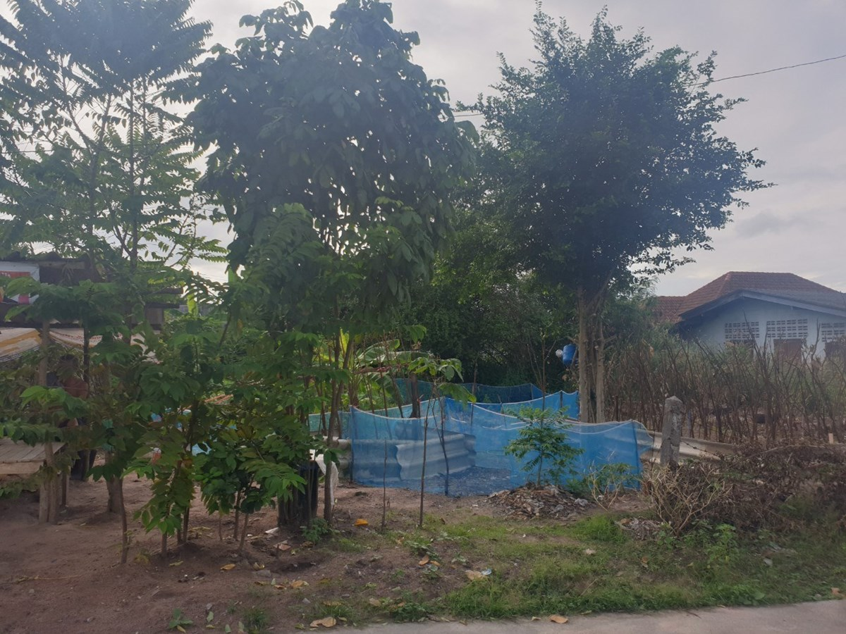 109 SQW. Land for Sale - Nongmaikean (Noen Plubwan)